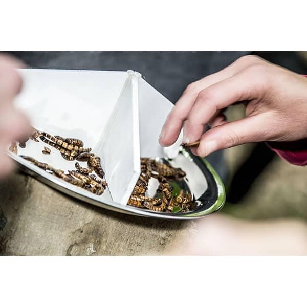 Dégustation d'insectes : les insectes sous cloche
