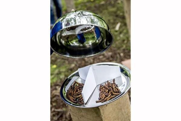 Dégustation d'insectes : on leve la cloche